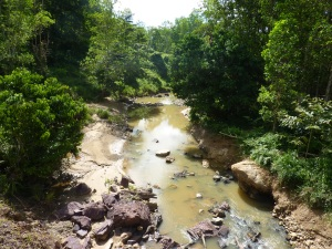 riparian reserve river